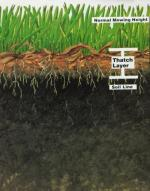 Aeration - What About Thatch?