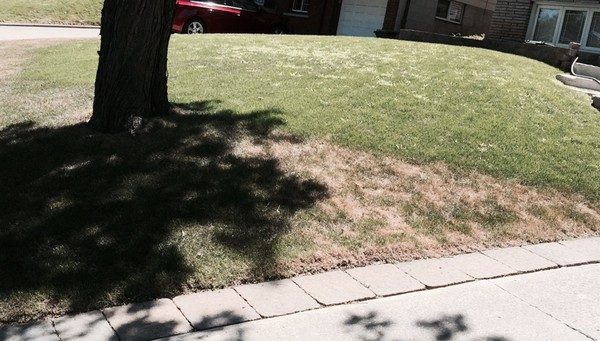 Watering Makes a Difference in Lawn Care