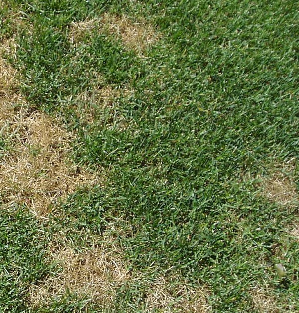 Dog Spots cause Lawn Damage